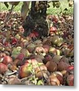 Carpet Of Apples Metal Print