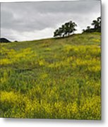 Carpet Of Malibu Creek Wildflowers Metal Print
