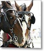 Carriage Horse - 3 Metal Print
