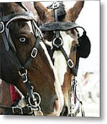 Carriage Horse - 4 Metal Print