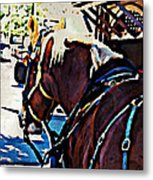Carriage Horse Metal Print