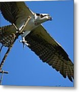 Carrying A Nest For A Living Metal Print