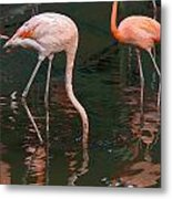 Cartoon - A Flamingo With Its Head Under Water In The Jurong Bird Park Metal Print