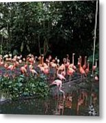 Cartoon - Flamingos In Their Exhibit Along With A Small Lake In The Jurong Bird Park Metal Print