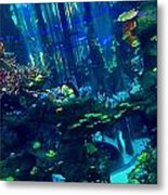 Casablanca Aquarium Close-up Metal Print