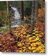 Cascade Creek  Autumn Metal Print