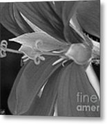 Cascading Ivy Geranium Named Decora Fire Metal Print