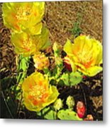 Cascading Prickly Pear Blossoms Metal Print