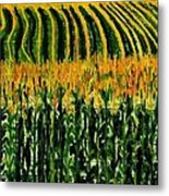 Cash Crop Corn Metal Print