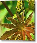 Castor Bean Leaf And Pod Metal Print