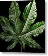 Castor Bean Leaf Metal Print