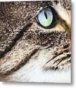 Cat Art - Looking For You Metal Print by Sharon Cummings