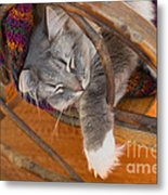Cat Asleep In A Wooden Rocking Chair Metal Print