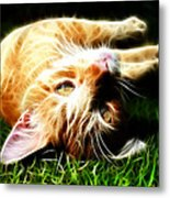 Cat At Play Metal Print by Jo Collins
