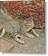Cat At Wat Mahathat In 13th Century Sukhothai Historical Park-th Metal Print