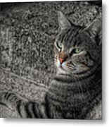 Cat Bicolored Metal Print