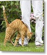 Cat Brushing Against Legs Metal Print