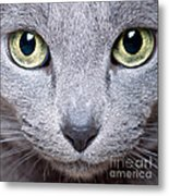 Cat Eyes Metal Print