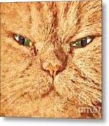 Cat Face Close Up Portrait. Painted Effect Metal Print