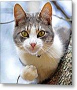Cat In A Tree Metal Print