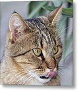 Cat In Athens Metal Print