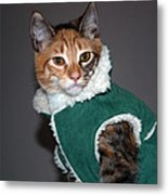 Cat In Patrick's Coat Metal Print