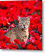 Cat In Red Metal Print