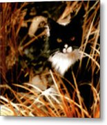 Cat In The Golden Grass Metal Print