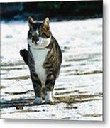 Cat In The Snow Metal Print