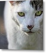 Cat Looking Metal Print