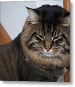 Cat Nap Time Metal Print