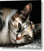 Cat Napping In The Sun By David Perry Metal Print