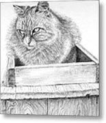 Cat On A Box Metal Print