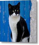 Cat On A Greek Island Metal Print