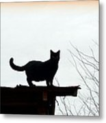 Cat On A Tin Roof 2 Metal Print