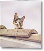 Cat On The Hot Tin Roof Metal Print