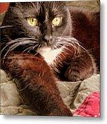 Cat On Velvet Metal Print by Maria Scarfone