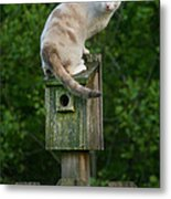 Cat Perched On A Bird House Metal Print