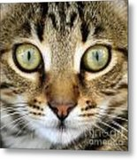 Cat Portrait Macro Shot Metal Print