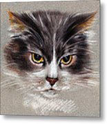 Cat Portrait Yellow Eyes Metal Print