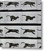 Cat Running Metal Print