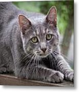 Cat Stretch Metal Print