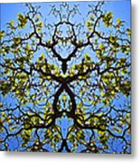 Catalpa Tree Metal Print