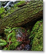 Cataracts Canyon Log And Streem Metal Print