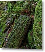 Cataracts Canyon Mossy Log  Metal Print