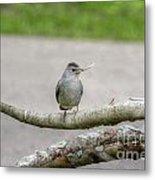 Catbird And Nest Material Metal Print