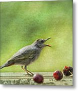 Catbird Eating Cherries Metal Print