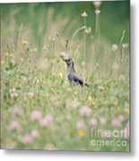Catbird In The Wildflowers Metal Print