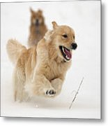 Catch Me If You Can Metal Print by Vic Harris