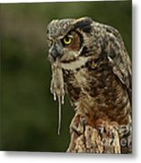Catch Of The Day - Great Horned Owl  Metal Print by Inspired Nature Photography Fine Art Photography